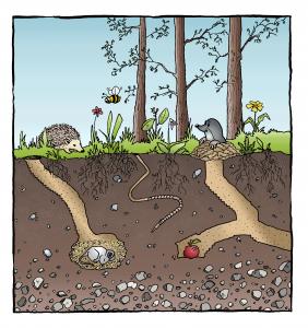 Unverbauter Boden - Natur