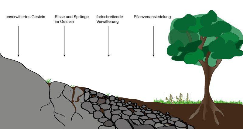 Bodenentstehung