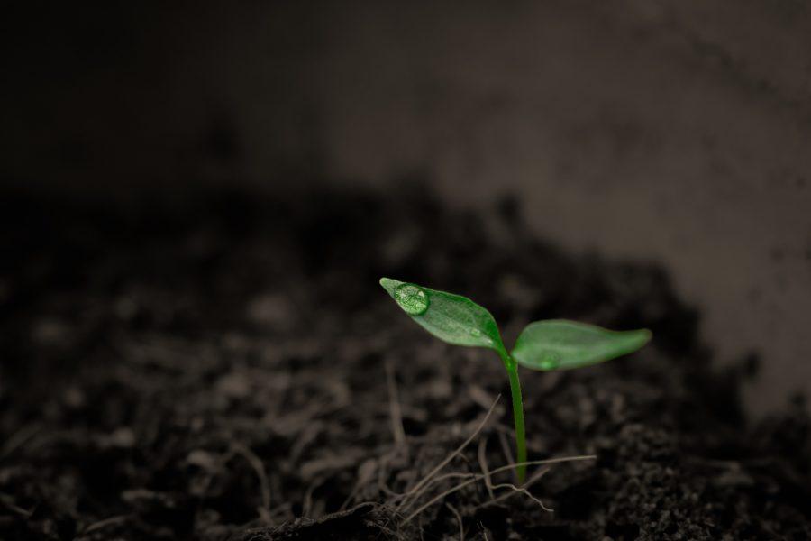 Pflanze die aus dem Boden sprießt